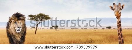 Lion and giraffe closeup over Kenya, Africa scene. Sized for website or social media header Royalty-Free Stock Photo #789399979