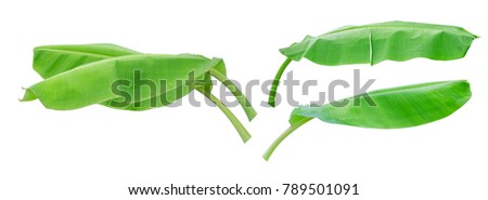 Four green banana leaf isolated on white background with clipping path. #789501091
