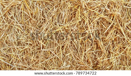 straw, dry straw texture background, vintage style for design. #789734722