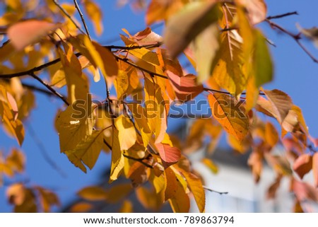 leaves of trees in autumn #789863794