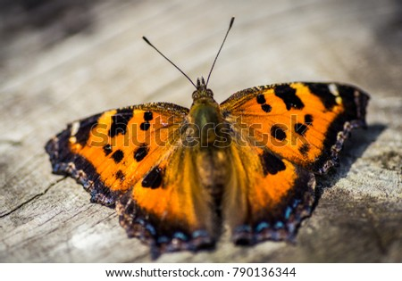 Orange butterfly on wood background closeup. #790136344