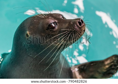 close-up view of adorable sea lion in blue water, baikal, listvyanka, russia