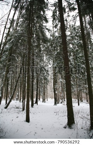 Winter snow forest #790536292