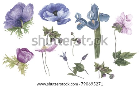 Vintage set of blu, purple and pink flowers: anemones, iris and clematis, watercolor painting. For prints, cards and for pattern.