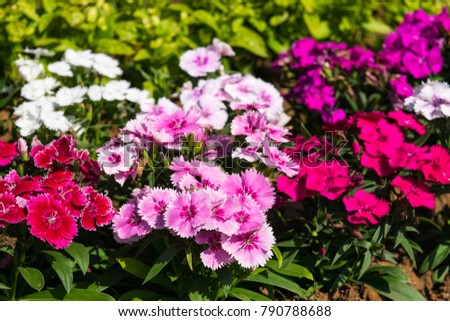 Colorful flowers in the garden #790788688