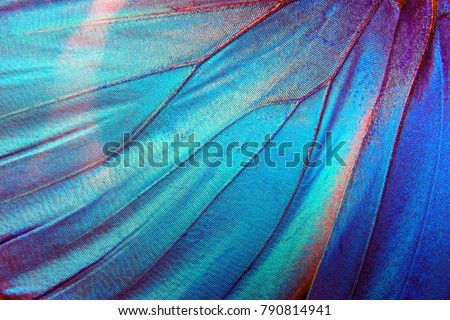 Detail of morpho butterfly wing Royalty-Free Stock Photo #790814941