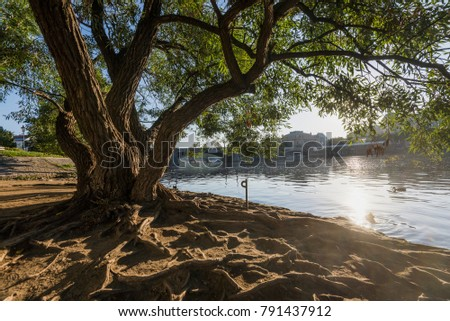 Tree and river in Prague #791437912