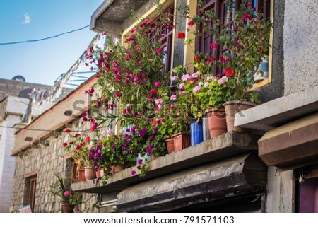 Flower pots on the window in Tibetan house, Ladakh, India #791571103