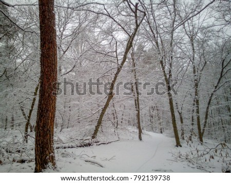 Hidden Forest Track covered in Snow #792139738
