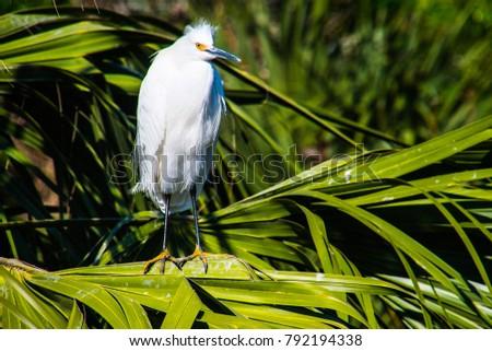 Small Egret in Florida Fauna #792194338
