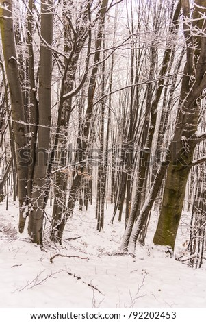 Winter at the morning in the forest #792202453