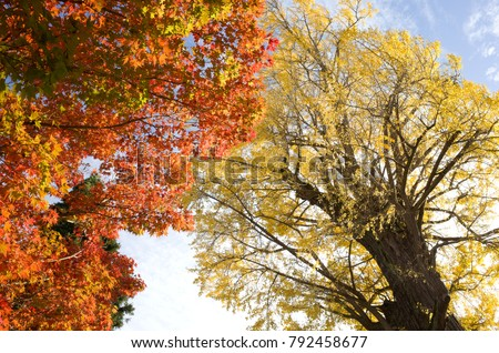 Autumn leaf color #792458677