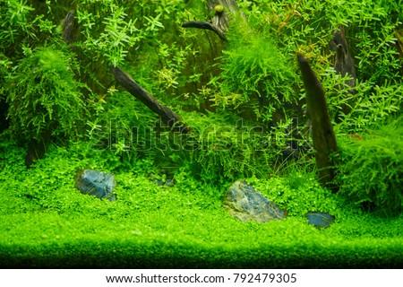 Beautiful plant in aquarium