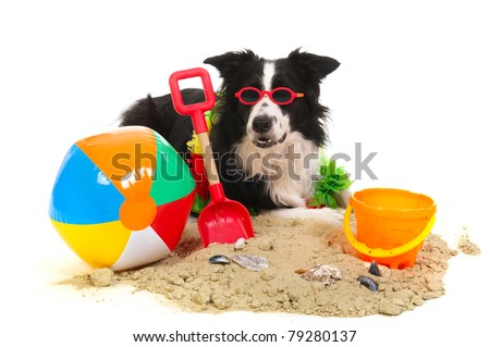 Portrait of a dog on vacation at the beach