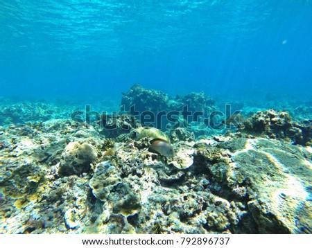 coral reef in san blas panama #792896737