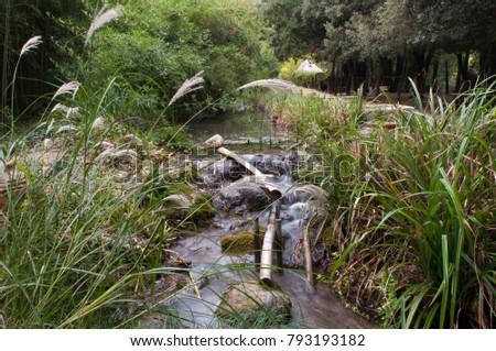 Green Garden Bamboo  #793193182