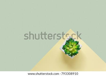Table top view aerial image of minimal background concept.Flat lay tree in a pot on modern rustic yellow & green paper at home office desk.Duo backdrop with pastel tone.Free space for creative design.