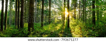 Panorama of a forest at sunrise #793671277