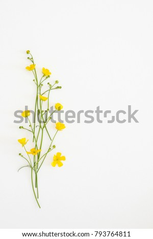 Postcard with fresh flowers Ficaria verna on a light background #793764811