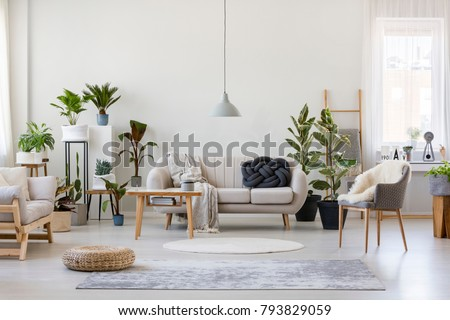 Pouf and gray armchair in spacious living room interior with plants and sofa near wooden table Royalty-Free Stock Photo #793829059