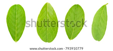 Cranberry leaf set isolated on a white. #793910779