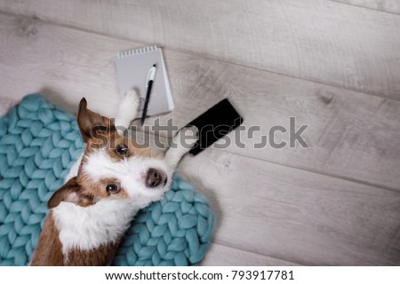 the dog uses the phone and notepad. The pet is at home. Jack Russell Terrier