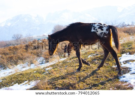the brown horse strolls through the steppe #794012065