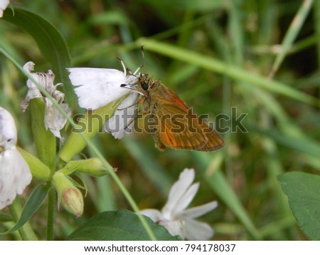 flowers insect butterfly #794178037