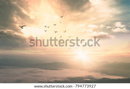 Background of heaven concept: Birds flying with mountain and sepia sky sunrise. Nok Ann cliff, Phu Kradueng National Park, Loei, Thailand, Asia