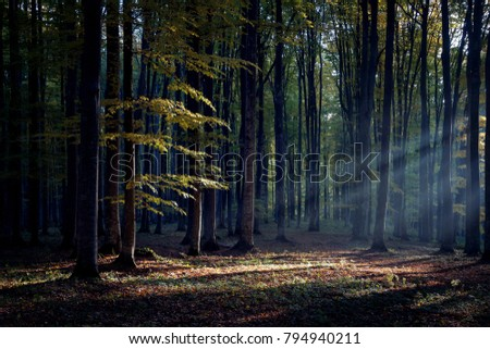 Foggy forest at sunrise #794940211