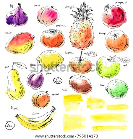 Hand drawn ink and watercolor sketch fruits, yellow watercolor stripes. Apple, orange, fig, pineapple, pear, mango, lime, plum, apricot, peach, kiwi, banana, pomegranate, persimmon. #795014173