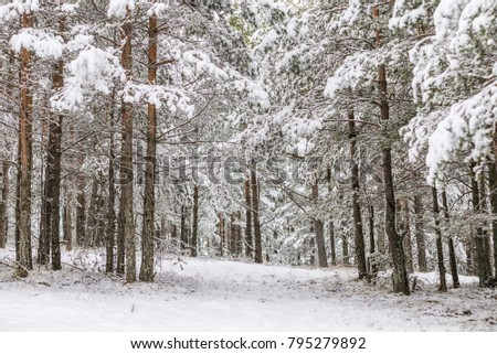 Snowy wood forest trees #795279892
