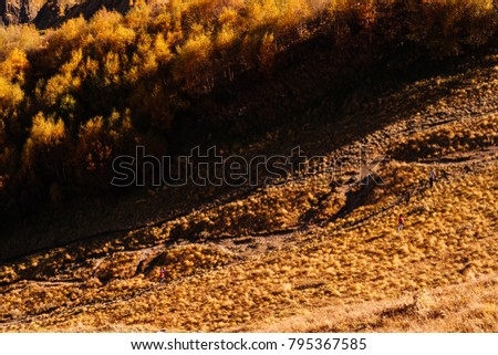 autumn yellow meadows and trees in the rays of the evening sun #795367585