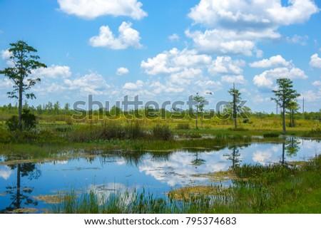 flying white swamp bird #795374683