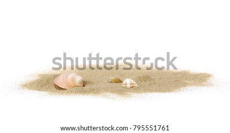 Sea shells in sand pile isolated on white background #795551761
