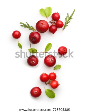 Fresh forest berry cranberry isolated on white background. #795705385