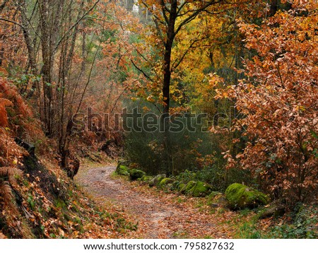 San Pedro de Rocas Forest in the Ribera Sacra Galicia, Spain              #795827632