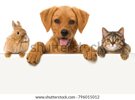 Little pets looking over a wall Royalty-Free Stock Photo #796015012