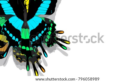 butterfly with black wings, blue patterns #796058989
