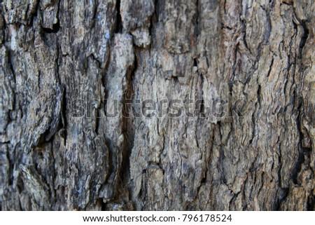 Longan tree bark #796178524