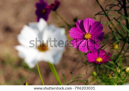 flower #796203031