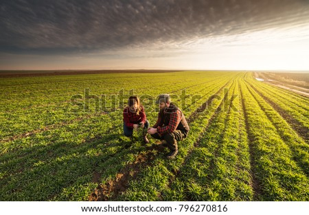 Young farmers examing planted young wheat during winter season Royalty-Free Stock Photo #796270816
