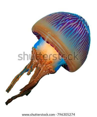 Jellyfish isolated on white background  #796305274