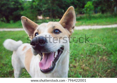 Dog on a green grass outdoors #796422001