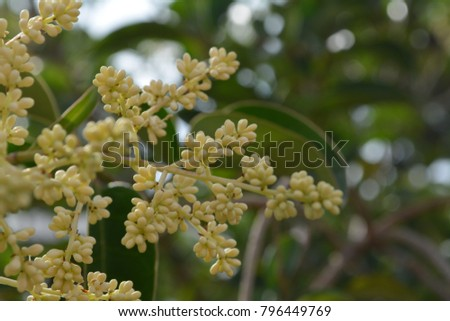 A close-up of a tree branch with buds #796449769