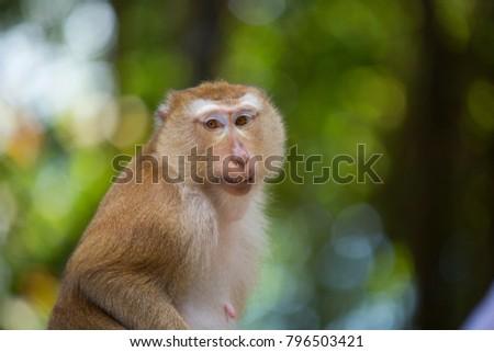 Monkeys of Monkey Hill  #796503421