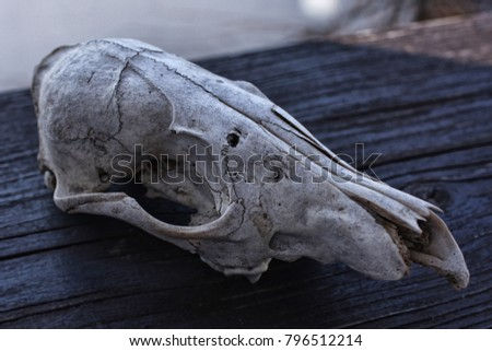 Skull of an unknown animal  Steemit post: https://steemit.com/photography/domacin/skull-of-an-unknown-animal #796512214