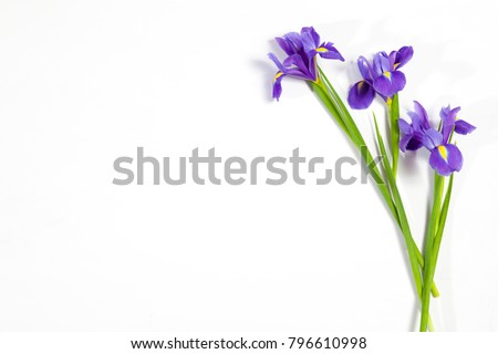Violet Irises xiphium (Bulbous iris, sibirica) on white background with space for text. Top view, flat lay. Holiday greeting card for Valentine's Day, Woman's Day, Mother's Day, Easter!