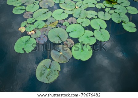 Water Lilies in Pond #79676482
