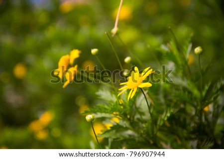 lovely yellow flowers #796907944